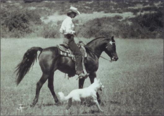 arabian-horse-cow-8